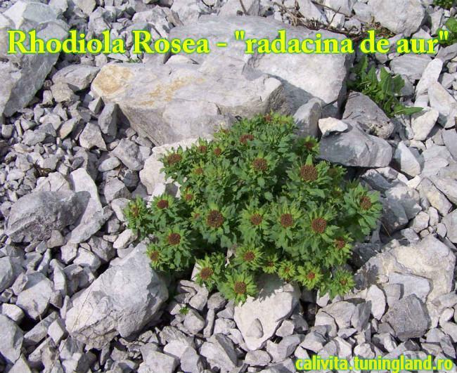 Rhodiolin cu extract de Rhodiola Rosea